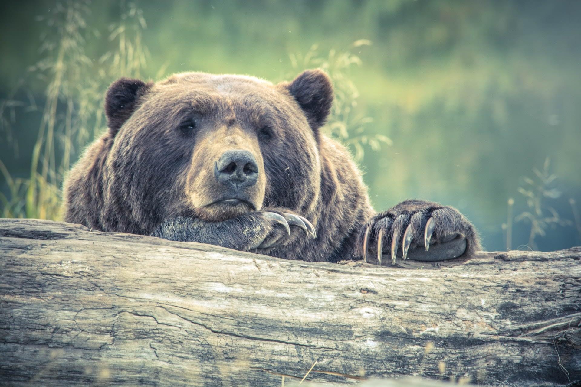 Community Bear Notice